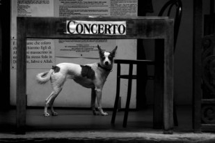Pup e Concerto - Florence, Italy
